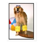 Golden retriever que practica surf tarjetas postales