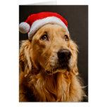 Golden retriever que presenta para su navidad tarjeta