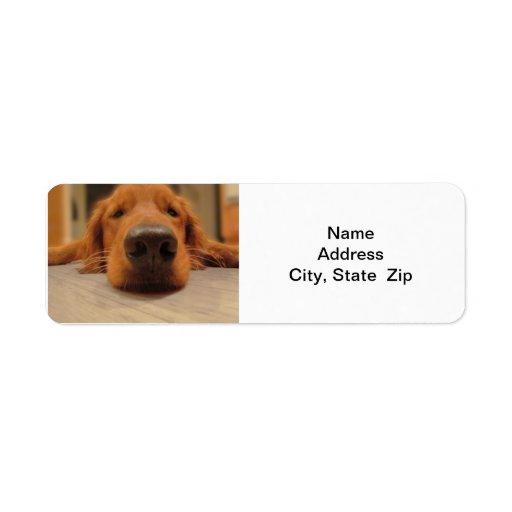 Golden Retriever Return Address Label,  Nose