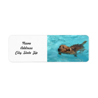 Golden Retriever Return Address Label, Swim Return Address Label