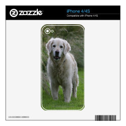 Golden Retriever Running 2 Decal For The iPhone 4