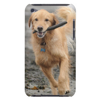 Golden Retriever Running With  Stick In Mouth Case-Mate iPod Touch Case