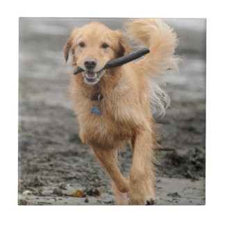 Golden Retriever Running With  Stick In Mouth Ceramic Tile