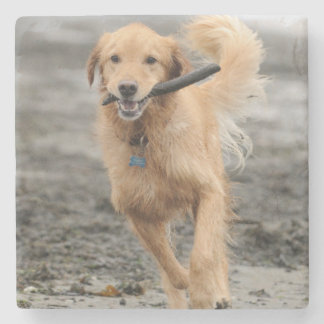 Golden Retriever Running With  Stick In Mouth Stone Coaster