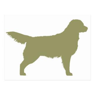 Golden Retriever (sage green) Postcard