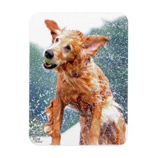 Golden Retriever Shaking water photo magnet