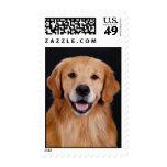 Golden Retriever Simon Postage Stamp