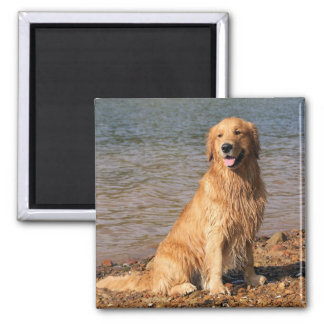 Golden Retriever Sitting 2 Inch Square Magnet