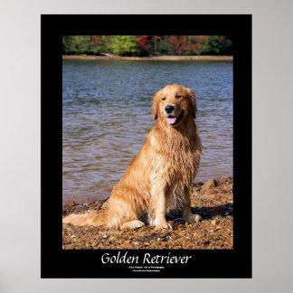 Golden Retriever Sitting Black Border Poster
