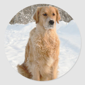Golden_Retriever_sitting.png Classic Round Sticker
