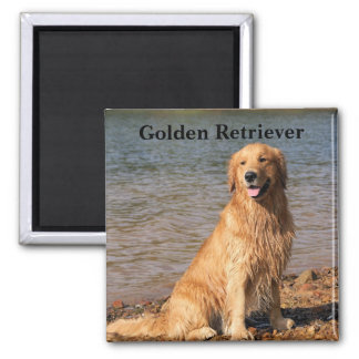 Golden Retriever Sitting Text 2 Inch Square Magnet