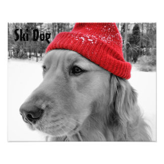 Golden Retriever Ski Dog Custom Text Photo Print