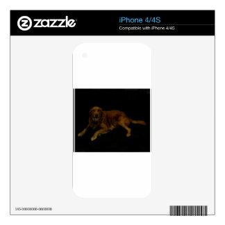 Golden Retriever Skin For iPhone 4