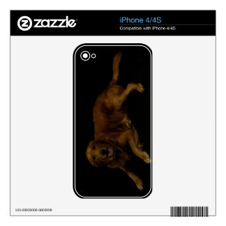 Golden Retriever Skins For The iPhone 4S
