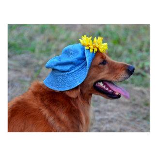 Golden retriever sonriente en gorra postal