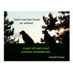 Golden Retriever Spiritual Pet Quote Postcards
