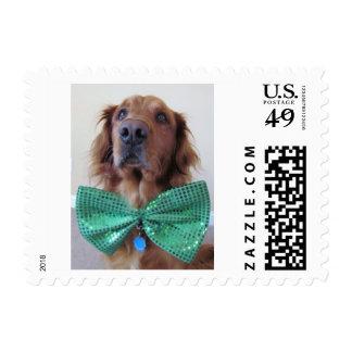 Golden Retriever St. Patrick's Day Postage Stamp