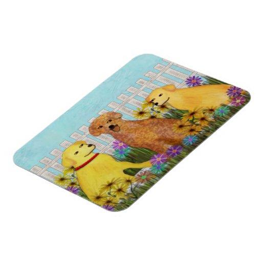 Golden Retriever Sunshine Premium Magnets