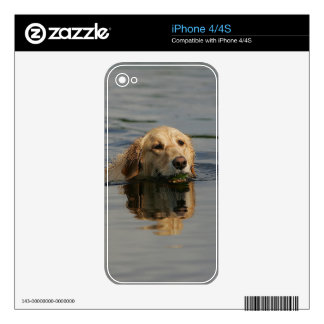 Golden Retriever Swimming Decal For iPhone 4