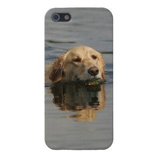 Golden Retriever Swimming iPhone 5 Case