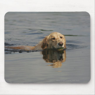 Golden Retriever Swimming Mouse Pad