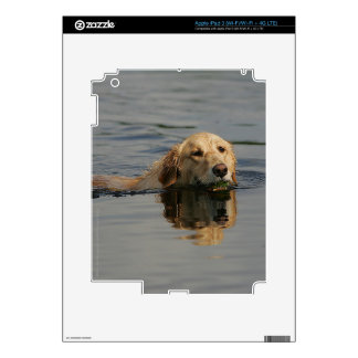 Golden Retriever Swimming Skin For iPad 3