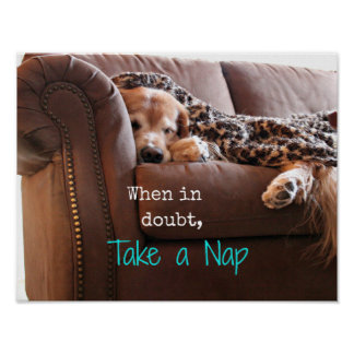 Golden Retriever Take a Nap Poster