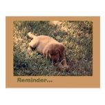 Golden retriever tarjetas postales