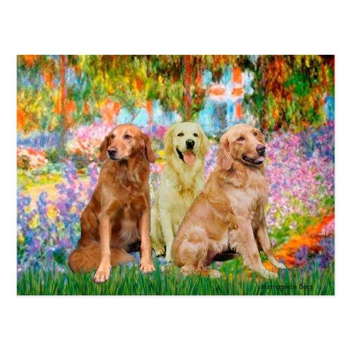 Golden Retriever Trio - Garden Postcards