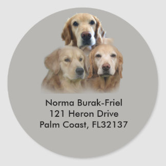 Golden Retriever Trio Return Address Stamp Classic Round Sticker