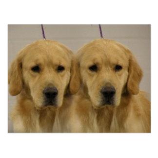 Golden Retriever Twins Postcard