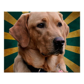 Golden Retriever Vintage Background Green Yellow Poster