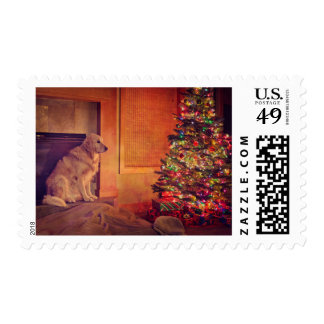 Golden retriever waits by fireplace postage