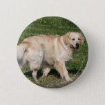 Golden Retriever Walking Button