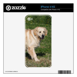 Golden Retriever Walking Decal For iPhone 4