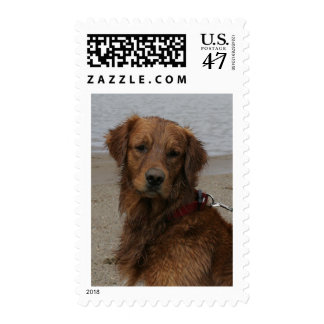 GOLDEN RETRIEVER - WATER LOVER POSTAGE