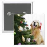 Golden retriever which watches Christmas tree Button
