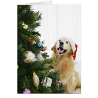 Golden retriever which watches Christmas tree Card