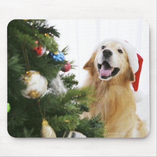 Golden retriever which watches Christmas tree Mouse Pad