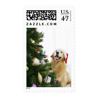 Golden retriever which watches Christmas tree Postage