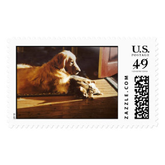 Golden Retriever With Cat Postage