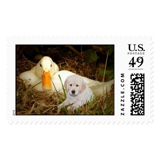 Golden Retriever with Duck Postage