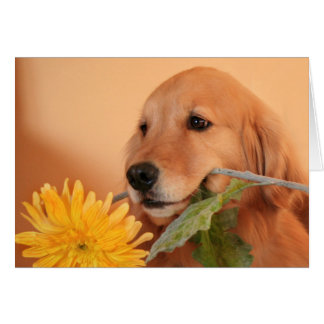 Golden Retriever With Flower Greeting Card