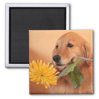 Golden Retriever With Flower Magnet