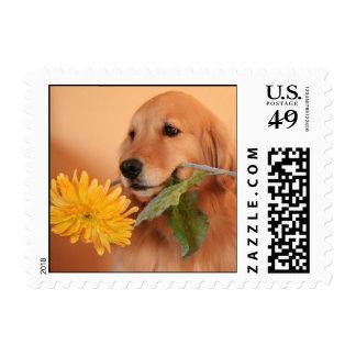 Golden Retriever With Flower Postage Stamp