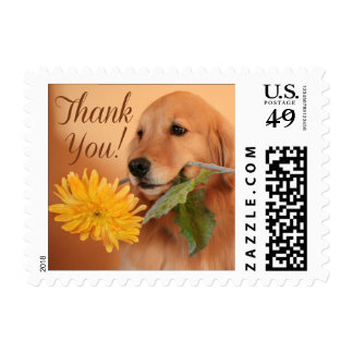 Golden Retriever With Flower Thank You Stamp