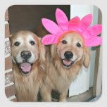 Golden Retriever With Pink Flower Headband Square Sticker