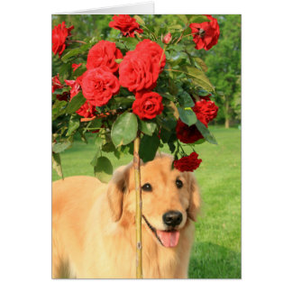 Golden Retriever With Roses Thinking of You Card
