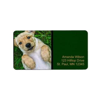 Golden Retriever Yellow Lab Puppy Address Labels