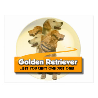 GOLDEN RETRIEVERS - BET YOU CAN'T OWN JUST ONE! POSTCARD